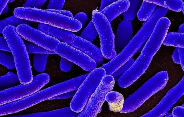 Hallan nuevos datos sobre cómo las bacterias resistentes a los fármacos construyen sus defensas
