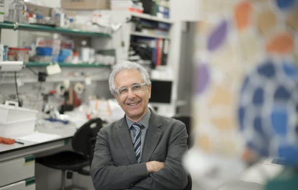 Cinco laboratorios del mundo buscarán tratamiento contra una forma mortal de epilepsia