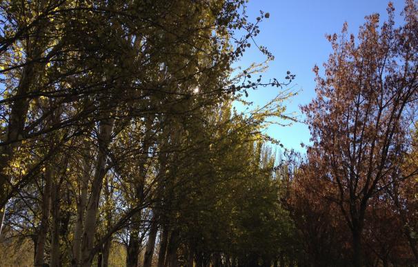 Noviembre comienza con cielos despejados y máximas que rondarán los 25 grados
