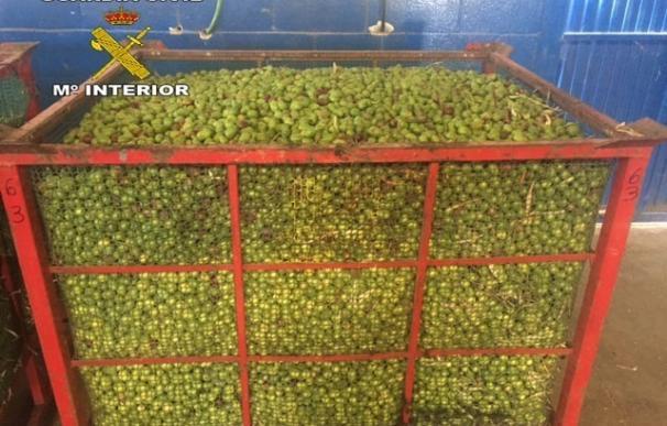 La Guardia Civil investiga a dos personas por el hurto de 16.885 kilos de aceitunas en Dos Hermanas
