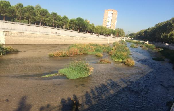 Carmena plantará 16.831 plantas en el Manzanares y prevé que habiten nuevas especies como la nutria