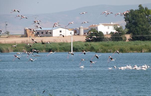 SEO/BirdLife organiza más de 400 actividades gratuitas para este fin de semana con motivo del Día Mundial de las Aves
