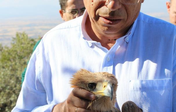 Dos ejemplares juveniles de águila imperial ibérica son devueltos al medio natural tras ser recuperados en el CERI