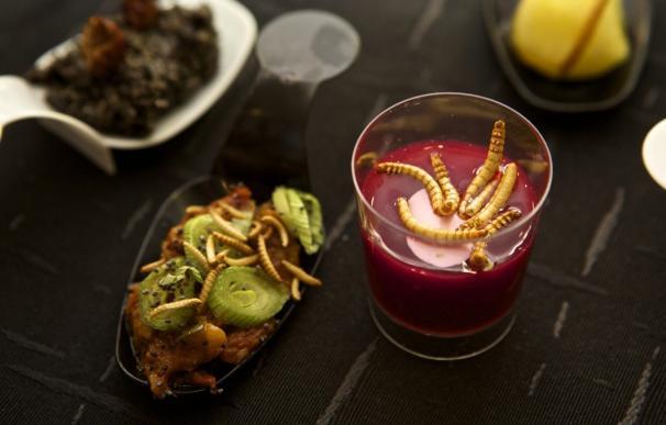 Una jornada gastronómica ofrece delicias culinarias elaboradas con grillos, hormigas o gusanos