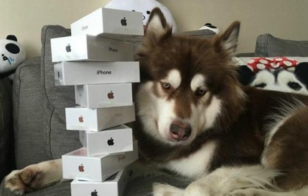 El perro de Wang Sicong con sus 8 iPhone 7