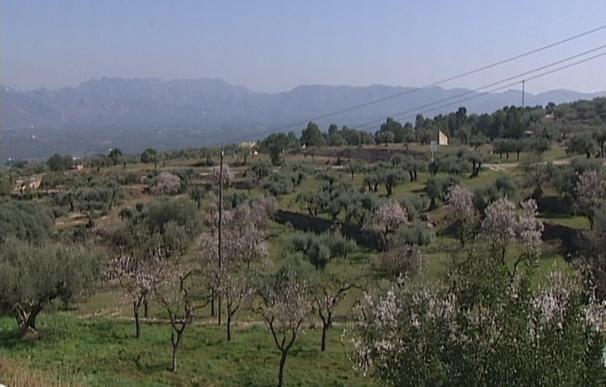 El pueblo de Rasquera implantará cultivos de marihuana para el autoconsumo