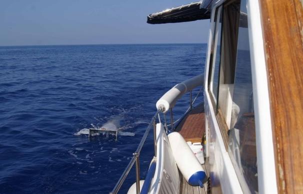 Los plásticos ya son parte del ecosistema marino del Mediterráneo, que cuenta con 1.455 toneladas sólo en la superficie