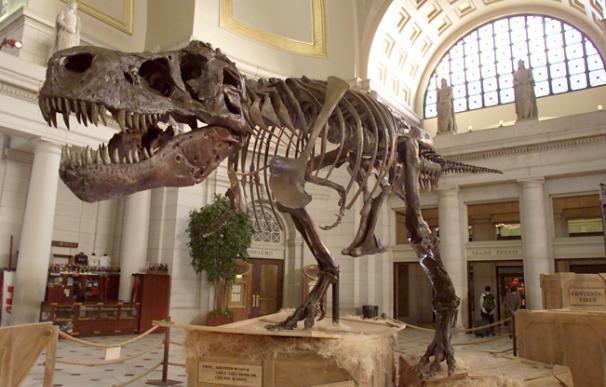Eric Prokopi subastó un esqueleto de Tiranosaurio por más de un millón de dólares.