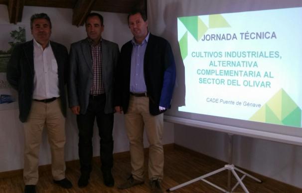 La Junta forma a medio centenar de emprendedores en cultivos industriales complementarios al olivar