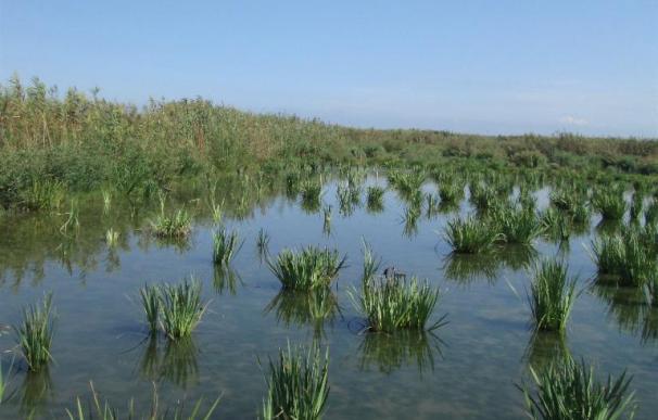 La Confederación del Júcar transforma un arrozal de la Albufera (Valencia) en varios humedales