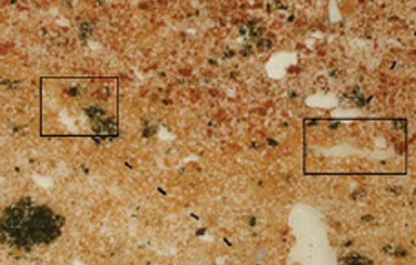 Análisis de los restos encontrados en las cueva de Wonderwerk (PNAS)