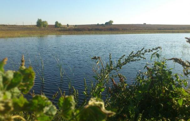Regantes del entorno de Daimiel ahorran más de 1 millón de m3 de agua con un proyecto de WWF y Coca-Cola