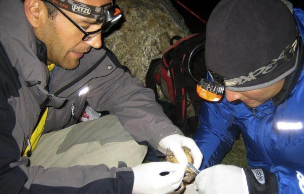Los anfibios, no tan feos como los pintan, en franca desaparición
