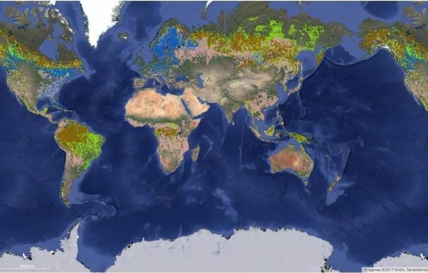 Expertos desarrollan un mapa que muestra, por primera vez en la historia, todos los bosques certificados del mundo