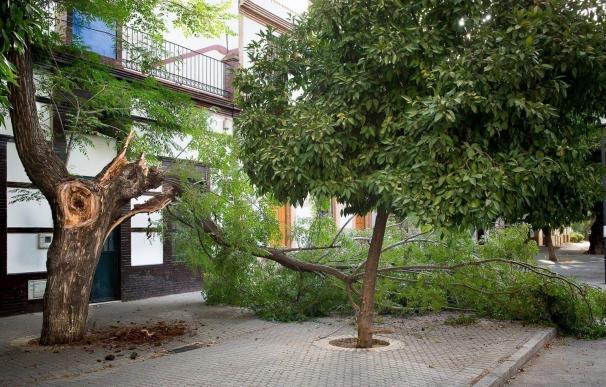 PP alerta de las caídas de ramas con nuevos casos en el Juncal y el centro y pide a Espadas que actúe