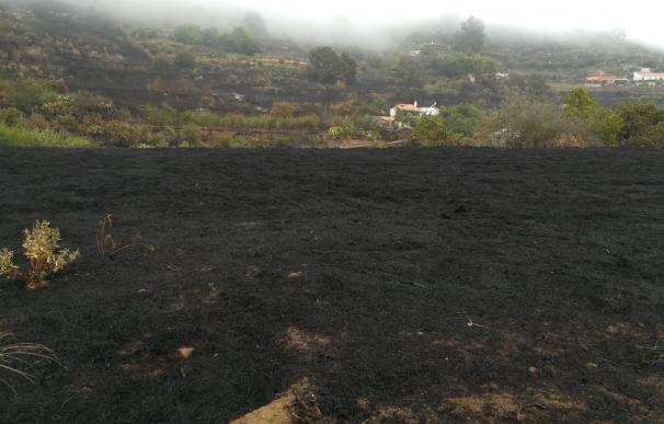 Gran Canaria destaca la capacidad de regeneración del terreno quemado, principalmente monte bajo y pinar