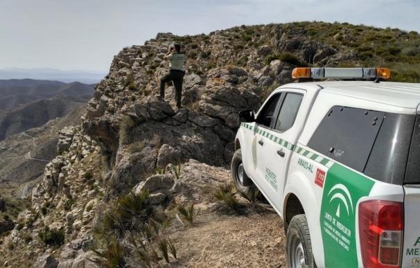 Junta refuerza la vigilancia contra el furtivismo en los Filabres durante la berrea del ciervo