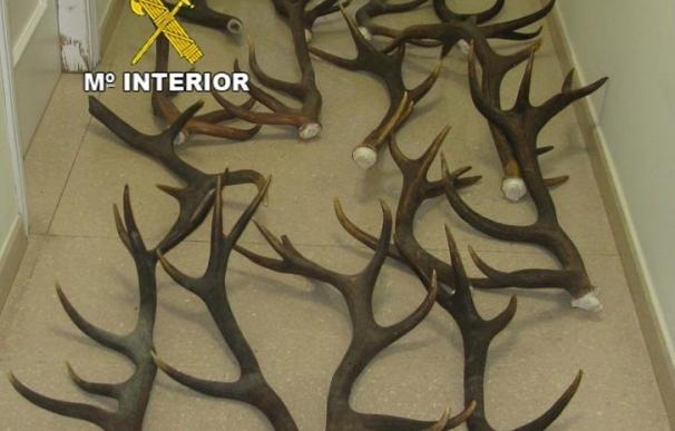 Detenidos cuatro jóvenes acusados de robar trofeos de caza valorados en más de 10.000 euros