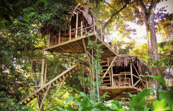Fotografía de la casa en el árbol de Panamá.