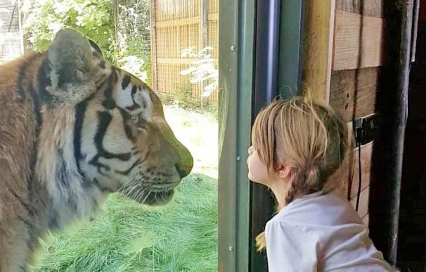 Fotografía de Tiger Lodge, la suite en la que puedes dormir con tigres.
