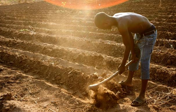 La agricultura parece un buen invento, pero quizás no lo fue tanto / Department of Foreign Affairs and Trade