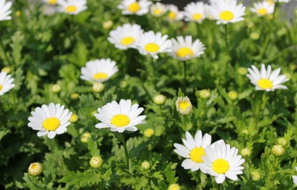 Fotografía de plantas con flores.
