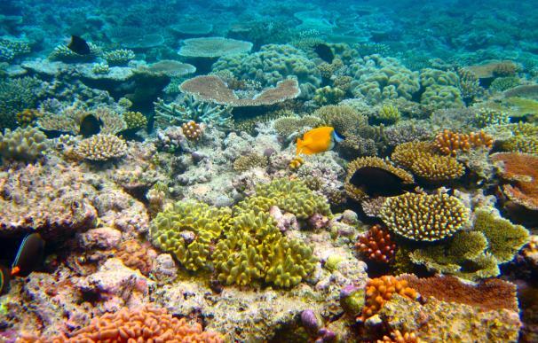 Fotografía de la Gran Barrera de Coral de Australia.