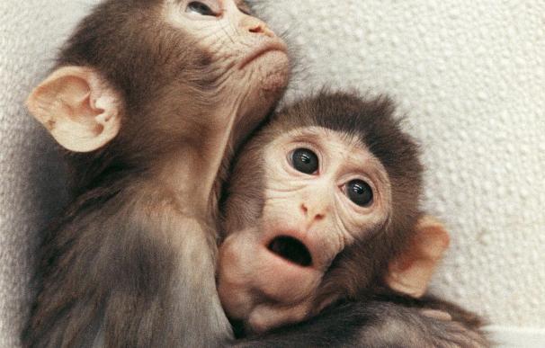 Personas ricas asumen más riesgos que los pobres, según experimento con monos