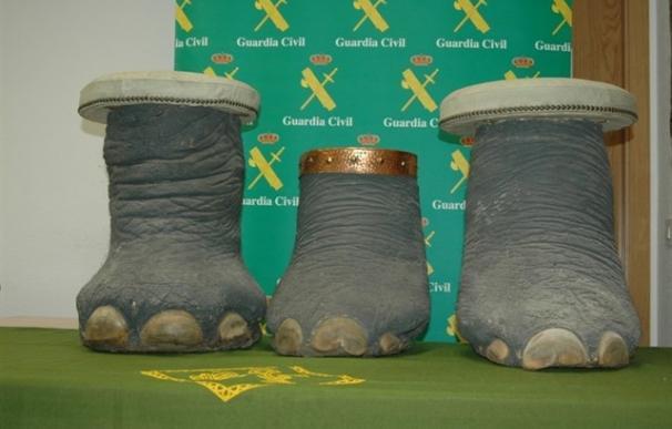 Fotografía de la incautación de la tres patas de un elefante africano