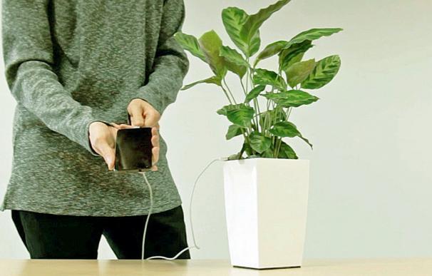 Cargar móviles con planta será posible en breve