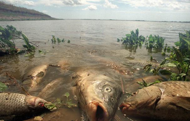 Miles de peces murieron a causa del vertido