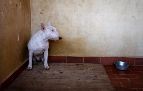 Un niño herido grave y otros dos leves al ser atacados por un perro pitbull