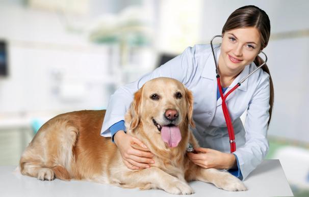Seguros veterinarios quiere acabar con la eutanasia de los perros