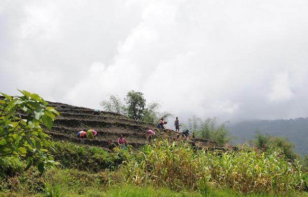 Bancales de la región de Sikkim / Sharada Prasad