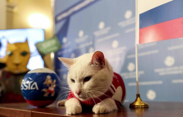 Fotografía del gato Aquiles, oráculo del Mundial de Rusia.
