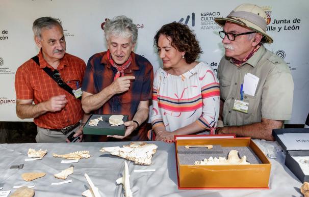 Atapuerca cráneo de 300.000 años