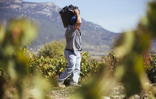 Imagen de vino de La Rioja