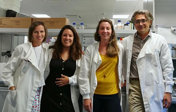 Desarrollan una nanoterapia que evita el rechazo de órganos trasplantados