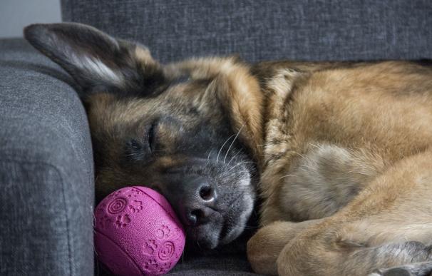 La pérdida de una mascota puede ser muy dolorosa. / Pixabay