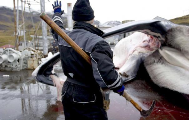 La UE, EEUU, México y Brasil piden a Islandia que detenga la caza de ballenas