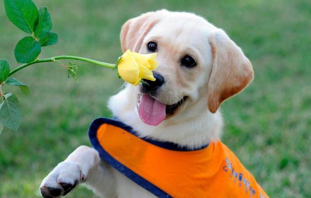 Los perros imitan las acciones novedosas de los humanos y las recuerdan