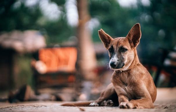 Fotografía de un perro en la calle.