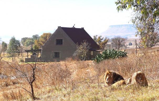 En esta casa de Airbnb puedes dormir pegado a 70 leones.