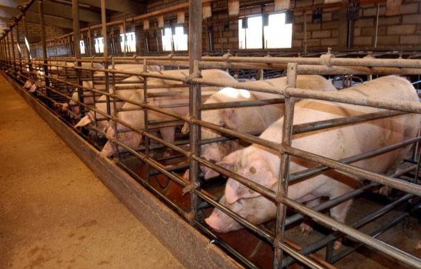COAG pedirá al Gobierno una línea oficial de créditos blandos para adaptar las granjas de aves y cerdos