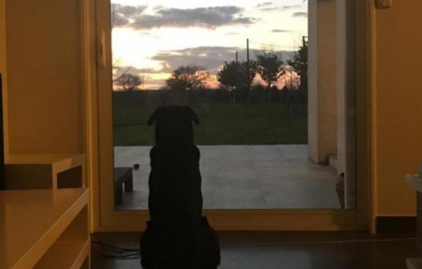 El perro de Emiliano Sala continúa esperando que regrese.