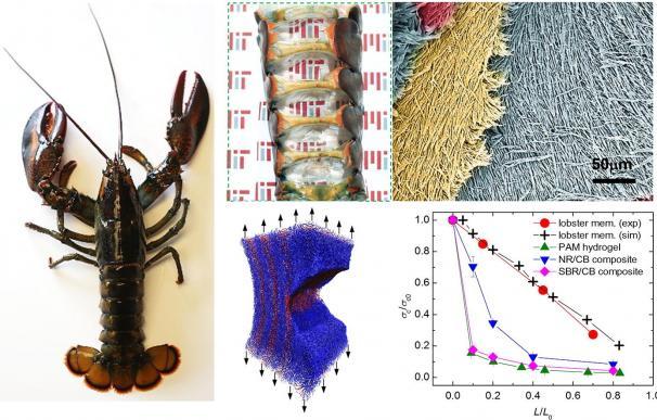 Una de las ilustraciones de la investigación del MIT publicadas en Acta Biomaterialia