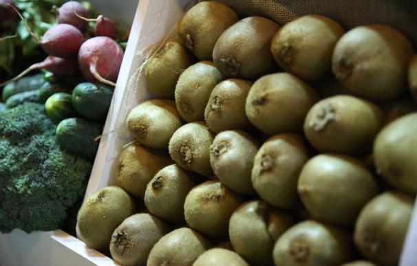 Gran Canaria promueve el cultivo del kiwi como agricultura alternativa en las medianías de la isla