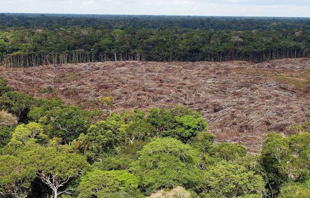 1,3 millones de hectáreas perdidas en el Brasil amazónico en 2018