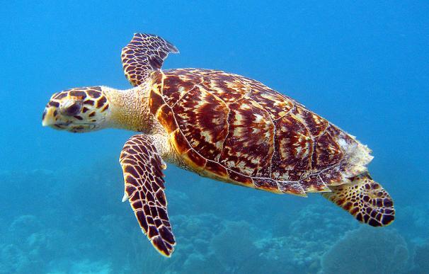 Fotografía de una tortuga tropical.