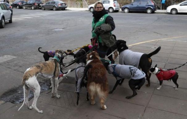 Fotografía pasaeadora de perros / EFE
